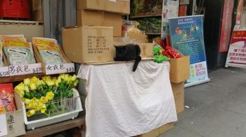 Chinatown Cat